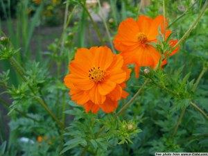 2-orange144_4407_jpg