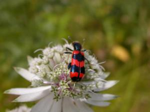 red-insect-09