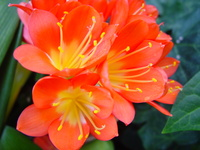 Orange and Yellow Flowers 1